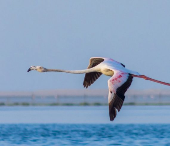 flamingo abu dhabi
